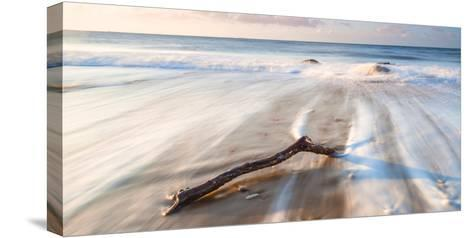 Branch on the Sea-Robert Maynard-Stretched Canvas Print