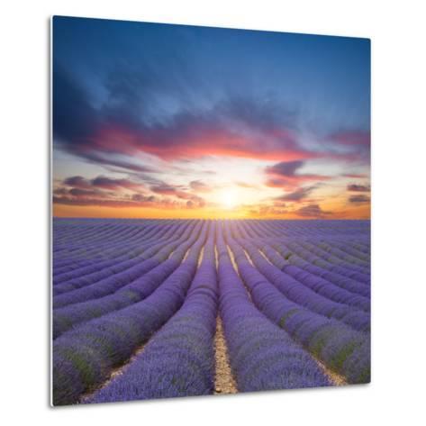 Beautiful Landscape of Blooming Lavender Field in Sunset. Provence, France, Europe-Jakub Gojda-Metal Print