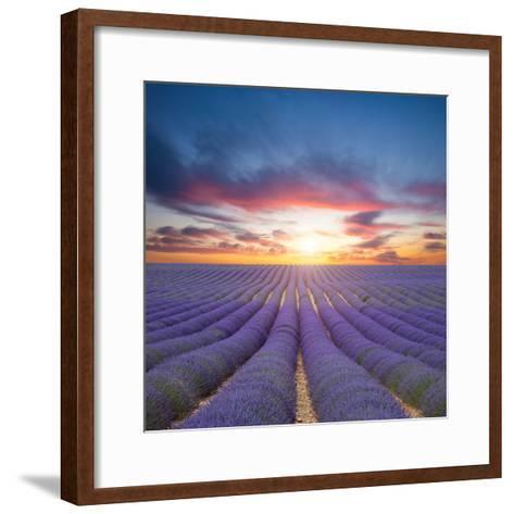 Beautiful Landscape of Blooming Lavender Field in Sunset. Provence, France, Europe-Jakub Gojda-Framed Art Print