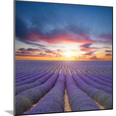 Beautiful Landscape of Blooming Lavender Field in Sunset. Provence, France, Europe-Jakub Gojda-Mounted Photographic Print