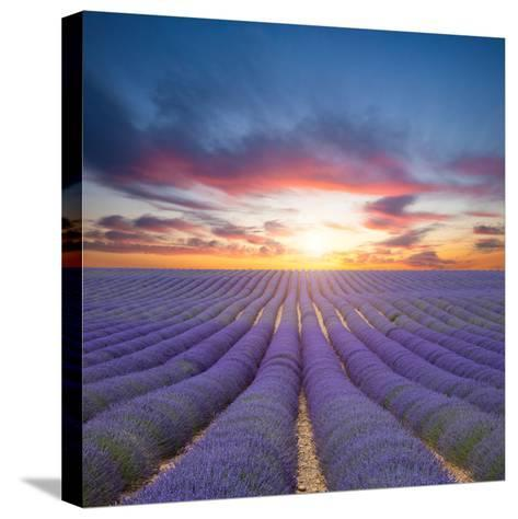 Beautiful Landscape of Blooming Lavender Field in Sunset. Provence, France, Europe-Jakub Gojda-Stretched Canvas Print