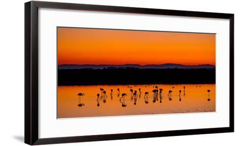 Beautiful Sunset Panorama with Flamingos Silhouettes, National Park Camargue, Provence, France-Jakub Gojda-Framed Art Print