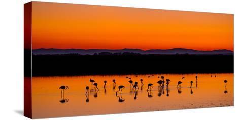 Beautiful Sunset Panorama with Flamingos Silhouettes, National Park Camargue, Provence, France-Jakub Gojda-Stretched Canvas Print