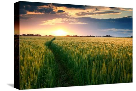 Beautiful Sunset, Field with Pathway to Sun, Green Wheat-Oleg Saenco-Stretched Canvas Print