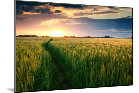 Beautiful Sunset, Field with Pathway to Sun, Green Wheat-Oleg Saenco-Mounted Photographic Print