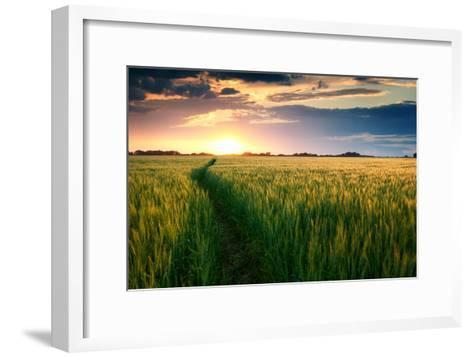 Beautiful Sunset, Field with Pathway to Sun, Green Wheat-Oleg Saenco-Framed Art Print
