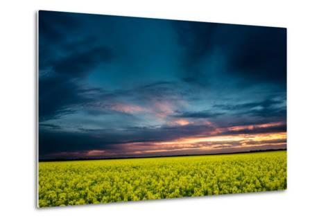 Beautiful Sunset in the Field-Oleg Saenco-Metal Print