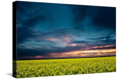 Beautiful Sunset in the Field-Oleg Saenco-Stretched Canvas Print