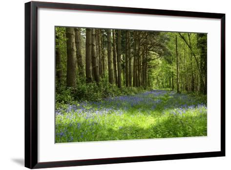 A Bluebell Wood in Oxfordshire, England in Early Summer-Arbor Images-Framed Art Print