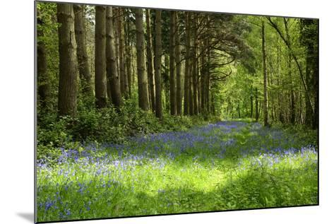 A Bluebell Wood in Oxfordshire, England in Early Summer-Arbor Images-Mounted Photographic Print