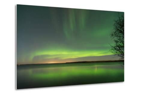 Northern Lights Reflecting in the Water with a Tree Silhouette-Brent Beach-Metal Print