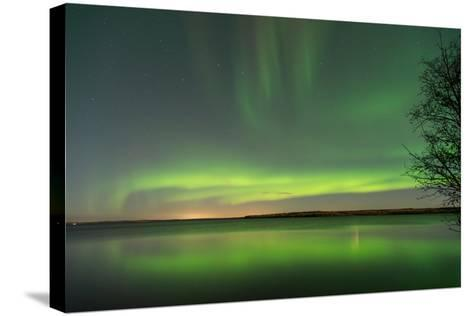 Northern Lights Reflecting in the Water with a Tree Silhouette-Brent Beach-Stretched Canvas Print