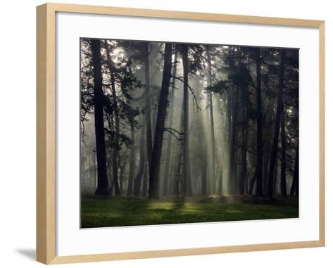 Misty Autumn Forest with Pine Trees-Taras Lesiv-Framed Art Print