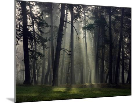 Misty Autumn Forest with Pine Trees-Taras Lesiv-Mounted Photographic Print