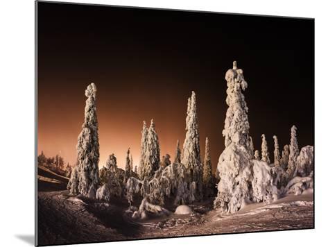 Orange Finnish Winter Forest-Nickolay Loginov-Mounted Photographic Print
