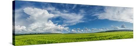 Panorama Ripening Wheat Field-Gennadiy Iotkovskiy-Stretched Canvas Print