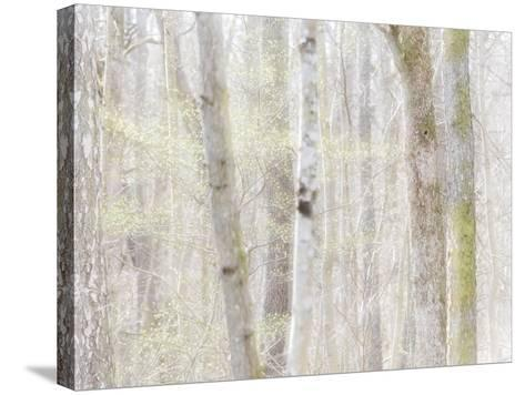 Close-Up of Trees in Forest-Utterstr?m Photography-Stretched Canvas Print