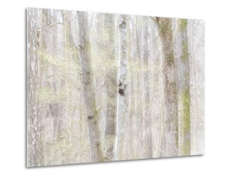Close-Up of Trees in Forest-Utterstr?m Photography-Metal Print