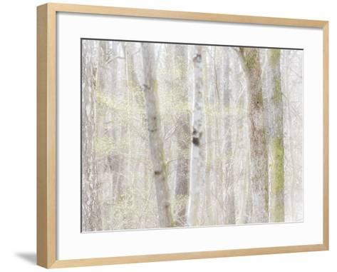 Close-Up of Trees in Forest-Utterstr?m Photography-Framed Art Print
