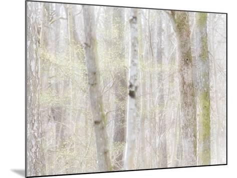 Close-Up of Trees in Forest-Utterstr?m Photography-Mounted Photographic Print
