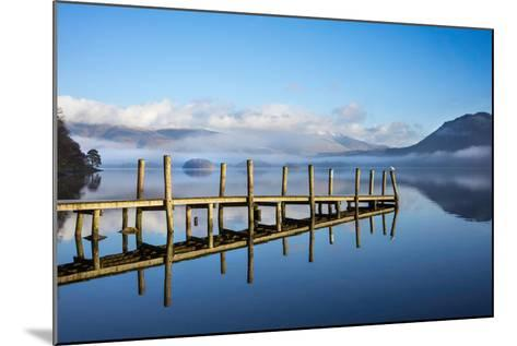 Gull on High Brandelhow Jetty, Derwentwater, the Lake District National Park, England-Tony Allaker-Mounted Photographic Print