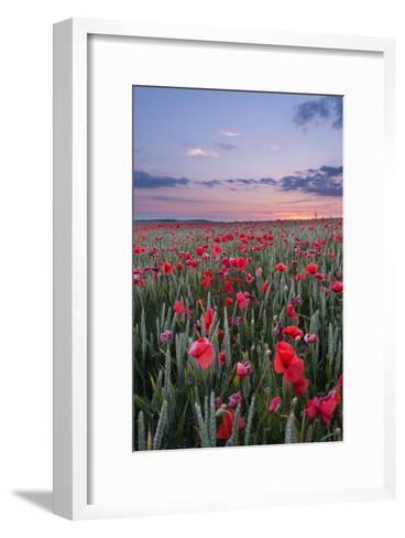 Dorset Poppy Field at Sunset-Oliver Taylor-Framed Art Print