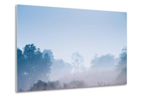 Forest in the Morning Mist-Pongphan Ruengchai-Metal Print