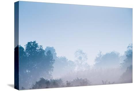 Forest in the Morning Mist-Pongphan Ruengchai-Stretched Canvas Print