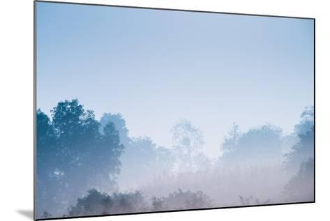 Forest in the Morning Mist-Pongphan Ruengchai-Mounted Photographic Print