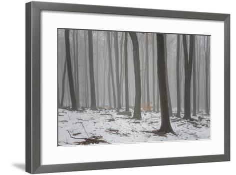 Forest in the Mist at Thaw Sleza Mount Landscaped Park- Shapencolour-Framed Art Print