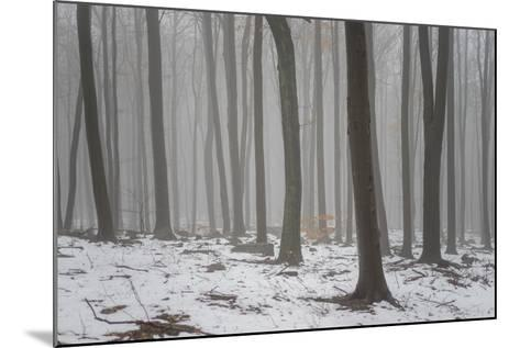 Forest in the Mist at Thaw Sleza Mount Landscaped Park- Shapencolour-Mounted Photographic Print