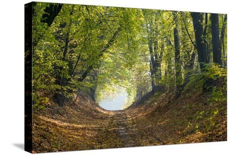 Forest Path in Autumn-Piotr Pawinski-Stretched Canvas Print