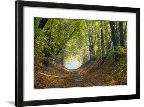 Forest Path in Autumn-Piotr Pawinski-Framed Art Print