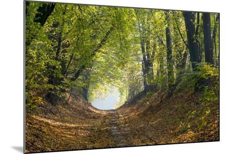 Forest Path in Autumn-Piotr Pawinski-Mounted Photographic Print