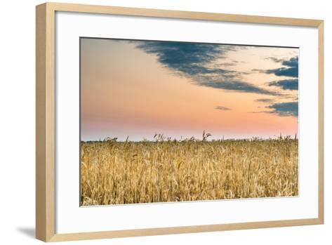 View of a Field of Wheat-Alexandr Savchuk-Framed Art Print