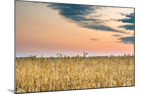 View of a Field of Wheat-Alexandr Savchuk-Mounted Photographic Print