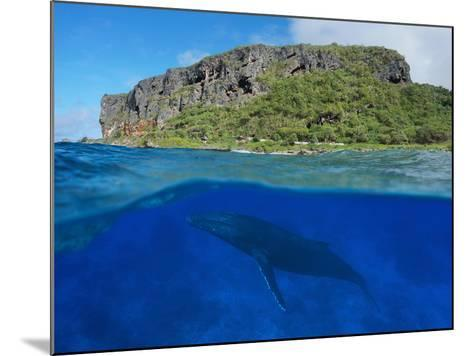 Split View Above and Below Sea Surface, Coastal Cliff with a Humpback Whale, Rurutu Island-Seaphotoart-Mounted Photographic Print