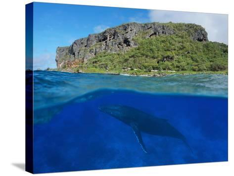 Split View Above and Below Sea Surface, Coastal Cliff with a Humpback Whale, Rurutu Island-Seaphotoart-Stretched Canvas Print
