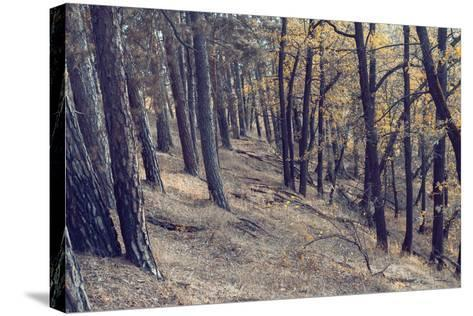 Yellow Leaves Trees-iunewind-Stretched Canvas Print