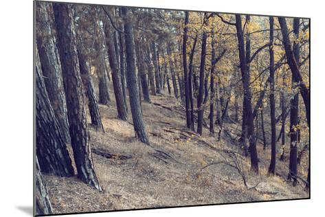 Yellow Leaves Trees-iunewind-Mounted Photographic Print