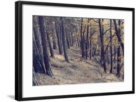 Yellow Leaves Trees-iunewind-Framed Art Print