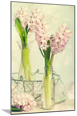 Spring Hyacinth Flowers in Vintage Glass Bottles-Amd Images-Mounted Photographic Print