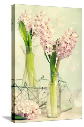 Spring Hyacinth Flowers in Vintage Glass Bottles-Amd Images-Stretched Canvas Print