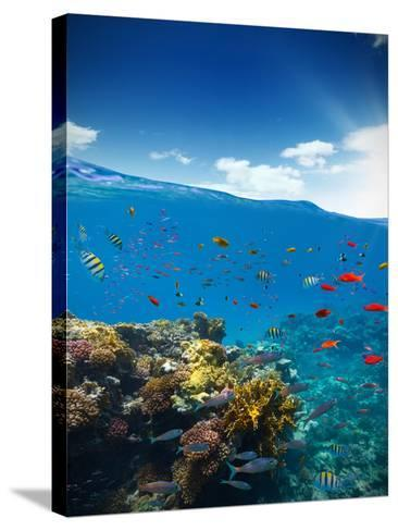 Underwater Coral Reef with Horizon and Water Waves-Jakub Gojda-Stretched Canvas Print