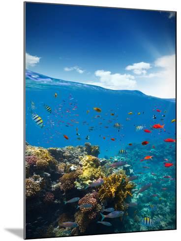 Underwater Coral Reef with Horizon and Water Waves-Jakub Gojda-Mounted Photographic Print