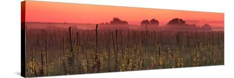 Sunrise on the Field in Summer-Anton Petrus-Stretched Canvas Print