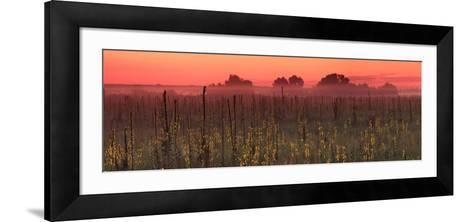 Sunrise on the Field in Summer-Anton Petrus-Framed Art Print