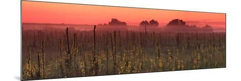 Sunrise on the Field in Summer-Anton Petrus-Mounted Photographic Print