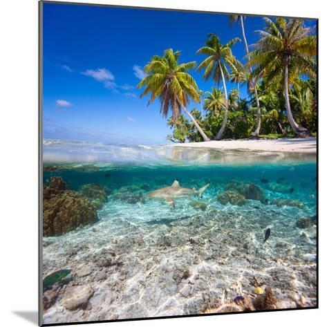 Tropical Island under and Above Water- Blueorangestudio-Mounted Photographic Print