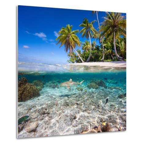 Tropical Island under and Above Water- Blueorangestudio-Metal Print